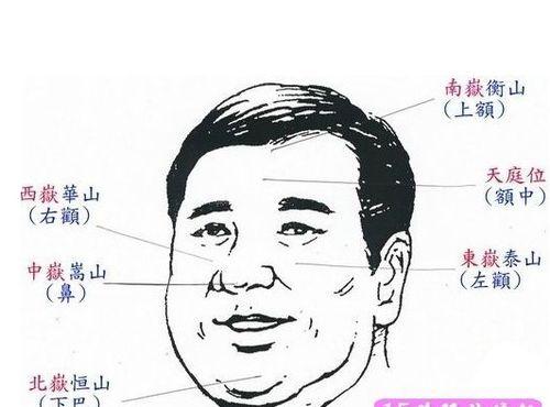 男人鼻子大的面相